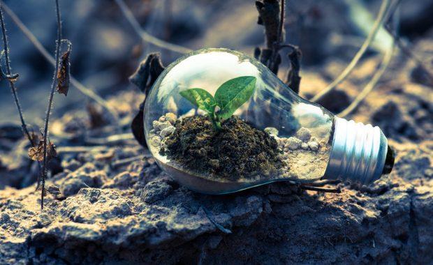Lamp met plantje